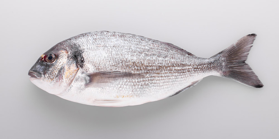 Sea Bream/ Sparus auratus